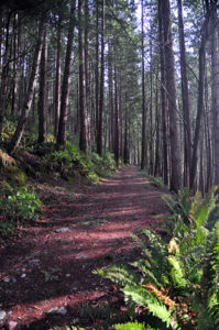 High-School-Trail-Tiger-Mountain-Issaquah-hiking
